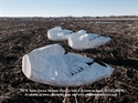 Picture of 1dz Snow Goose Sleepers