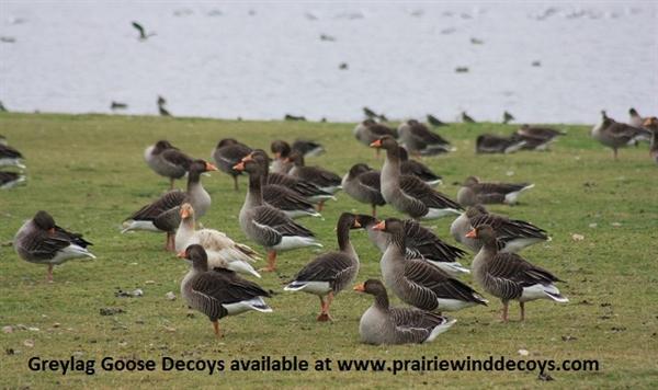 Prairiewind Decoys  **SALE** Pro Grade Full Body Greylag Goose