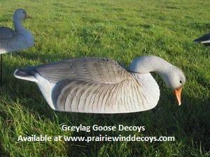 29fa8217f3248 Prairiewind Decoys. **SALE** Pro-Grade Greylag Goose Shells 1 dz ...