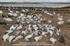 Picture of **SUMMER SALE** Sillosocks Snow Goose Sleeper Windsock Decoys (SS1012SLPR) by Sillosock Decoys