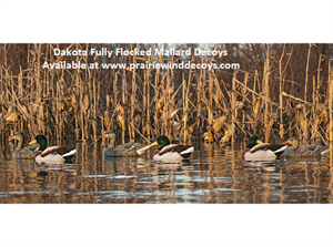 Picture of **FREE SHIPPING** FULLY Flocked Mallard Floater Duck Decoys 12pk (DAK17000) by Dakota Decoys