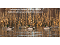 Picture of FULLY FLOCKED MALLARD FLOATER 6pk