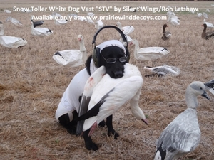 """Picture of **SALE** Snow Toller White Dog Vest """"STV"""" by Silent Wings/Ron Latshaw"""