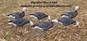 Picture of Migration Series Blue Goose 6pk