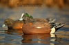 Picture of **FREE SHIPPING** Pro-Grade Wigeon Duck Decoys by Greenhead Gear GHG Avery Outdoors