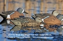 Picture for category TEAL SALE
