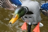 Picture of **FREE SHIPPING** KING MALLARD w/ Remote BY MOJO OUTDOORS