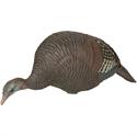 Picture of Feeding Hen Turkey-Rio Grande - AV78130
