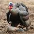 Picture of **FREE SHIPPING** Laydown Hen Turkey - Rio Grande by Greenhead Gear GHG