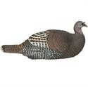 Picture of Laydown Hen Turkey-Rio Grande - AV78132