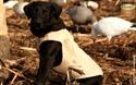 Picture of Boater's Dog Parka/White/Medium - AV03111