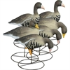 Picture of **FREE SHIPPING** APEX Specklebelly Full Body Goose Decoys by Higdon Decoys