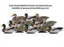 Picture of FULLY FLOCKED MALLARD FLOATER 12pk