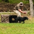 Picture of Wildfowler Dog Blind in Wildgrass by Wildfowler Outfitter