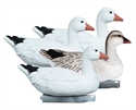 Picture of Snow Goose Foam Filled Floater 4pk - HO77153