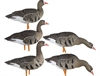 Picture of AXP Fusion Specklebelly Goose Decoys (Painted) by Avian X Decoys