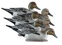 Picture of Standard Pintails - HO19521