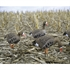 Picture of **FREE SHIPPING** FULLY FLOCKED Specklebelly  Whitefront Full Body Goose Decoys w/bags by Dakota Decoys