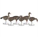 Picture of FULLY FLOCKED Speck 6pk - DAK12285