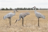 Picture of Sandhill Crane Decoys by Deception Decoys