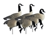 Picture of **FREE SHIPPING**  APEX Full Size Full Body CANADA Goose Decoys by Higdon Decoys