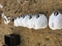 Picture of **FREE SHIPPING** Sleeper Snow Goose Shell Decoys by Greenhead Gear GHG Avery Outdoors